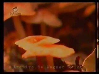 Psiconautas -  Cogumelos Mágicos - Canal Infinito